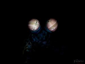 The eyes by Kelvin H.y. Tan