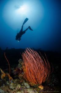 I N V E R T E D  Taket Malang/Malang Reef Lombok (Gili)... by Irwin Ang