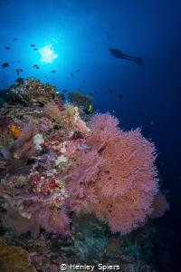 Reef Magic in Tubbataha by Henley Spiers