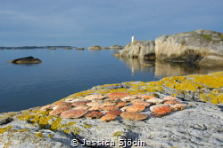 I woke up early in the tent on this island and collected ... by Jessica Sjödin