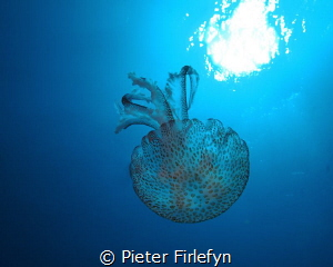 jelyfish by Pieter Firlefyn