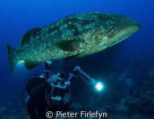 Grouper by Pieter Firlefyn