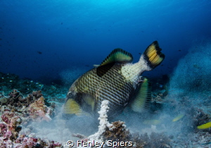 The most dangerous fish in the sea? by Henley Spiers