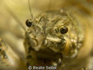 Crawfish in my favorite lake by Beate Seiler