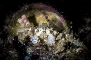 dirty boxer crab in the shell house by Raffaele Livornese