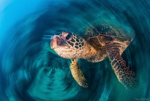 Turtle Whirl: Slow Shutter Spin by Tony Cherbas