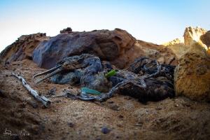 Plastic perils by Steven Miller