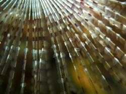 Fan worm by Victor Micallef