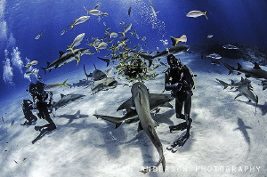Tiger Beach .... My kind of divers playground with lots o... by Steven Anderson