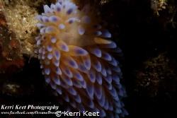 I celebrated Sea Slug Day on Saturday by shooting macro f... by Kerri Keet