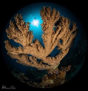 Fisheye view by Steven Miller