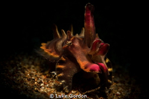 Flamboyant in the spotlight by Luke Gordon
