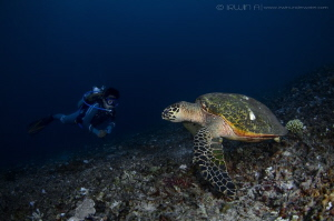 Talk to me.. Green sea turtle (Chelonia mydas) Lombok (... by Irwin Ang