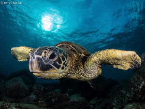 Honu Perspective: Low-Pass Fly-By. by Tony Cherbas