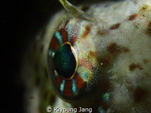 EYE OF BLENNY by Kiyoung Jang