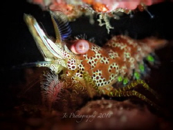 saron marble shrimp by Khow Jin Chee