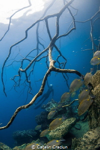 ''Hanging'' , shot on breath hold in Barracuda Lake using... by Catalin Craciun