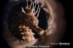 Smoke underwater. by Francesco Pacienza
