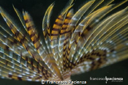Feather. by Francesco Pacienza
