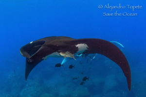 Following Mantaray, Isla San Benedicto México by Alejandro Topete