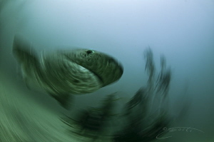 ~ Warp Speed ~ by Geo Cloete