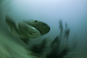 ~ Warp Speed ~ by Geo Cloete