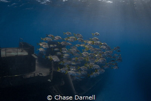 """""""Morning Commute"""" Diving the Kittiwake first thing in th... by Chase Darnell"""