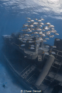 """""""Levels"""" The Kittiwake, a playground for divers and fish... by Chase Darnell"""