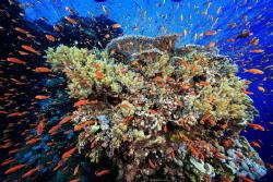 Spray Location :Red Sea Daedalus Reef Egypt Canon 5dsr... by Yung Sen Wu