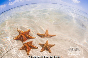 """Starfish And Water Droplet""