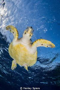 Dive dive dive! by Henley Spiers