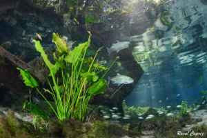 Natural aquarium by Raoul Caprez