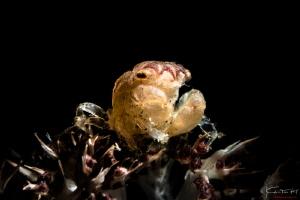 Megalopia by Kelvin H.y. Tan