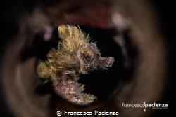 Hairy Hyppo. by Francesco Pacienza