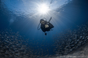 S U R R O U N D I N G Yellow stripe scad (Selaroides le... by Irwin Ang