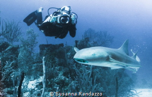 a nurse shark in Banco Chinchorro by Susanna Randazzo