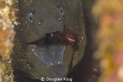 Dental hygiene. A demonstration of symbiosis on Anacapa I... by Douglas Klug