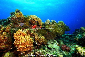 Reef in Balaclava in Turtle Bay  ,Mauritius.Jean-Yves Big... by Jean-Yves Bignoux