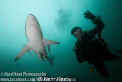 A perfect picture highlighting the benign nature of shark... by Kerri Keet