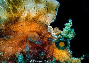 The Kraken ( Backlit Rhinopius) by Leena Roy