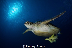 Turtle & Passengers by Henley Spiers