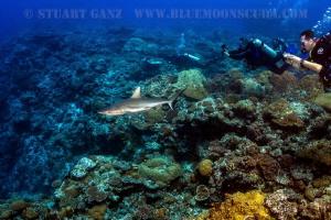 Watching the sharks by Stuart Ganz