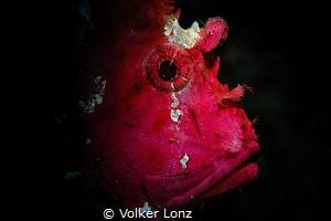 leaf fish by Volker Lonz