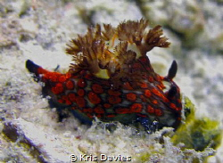 Can anyone identify this Nudie? I was told by the guide a... by Kris Davies