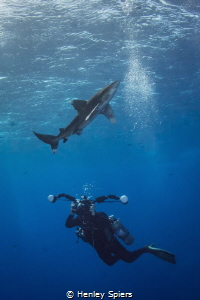 Photographer & Shark by Henley Spiers