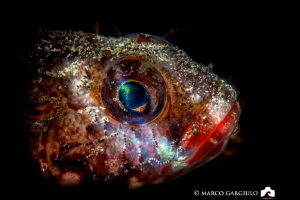 Red mouth goby by Marco Gargiulo