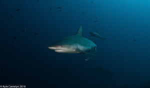 What is scarier than an ocean with sharks ? An ocean wit... by Kyle Castelyn