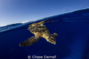 """""""Brief Blue Moments"""" Getting images of Turtles on or nea... by Chase Darnell"""