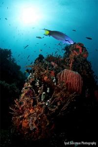 Underwater scenery by Iyad Suleyman