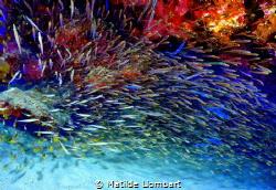 fuegos artificiales by Matilde Llombart